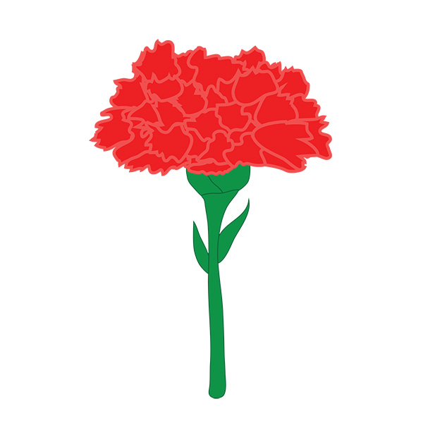 Carnation Illustration